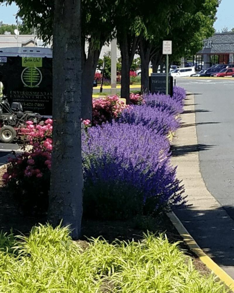 commercial gardener north virginia