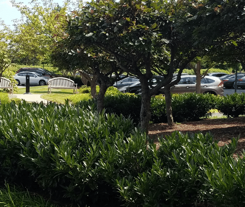 Commercial Landscape Management Value